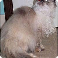 Adopt A Pet :: Stella - Colmar, PA
