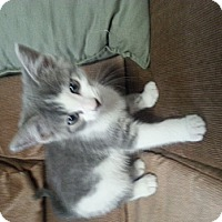 Adopt A Pet :: Laura - Troy, OH