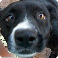 Adopt A Pet :: Darci - Oakley, CA