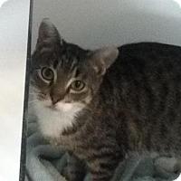 Adopt A Pet :: Fawn - Hamilton, ON