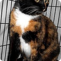 Adopt A Pet :: Gwyneth - Chattanooga, TN