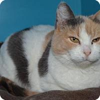Adopt A Pet :: Callie - Estherville, IA