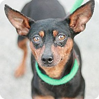 Adopt A Pet :: Lady Bug - Canoga Park, CA