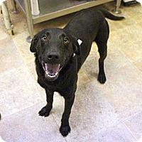 Adopt A Pet :: Taylor - Cumming, GA