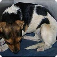 Adopt A Pet :: Waverly - Phoenix, AZ