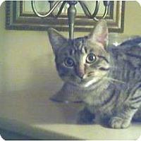 Adopt A Pet :: Mocha - Toronto, ON