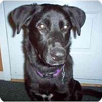 Adopt A Pet :: Kasey - Rigaud, QC
