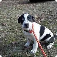 Adopt A Pet :: Jasper - in CT 3/27 - Adamsville, TN