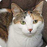 Adopt A Pet :: Cricket - Kalamazoo, MI