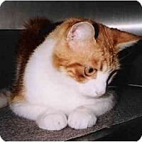 Adopt A Pet :: Mr. Lovable - Brea, CA