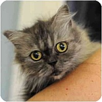 Adopt A Pet :: Lady Silver - Columbus, OH