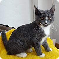 Adopt A Pet :: Teddy - N. Billerica, MA