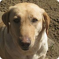 Adopt A Pet :: Danielle - Harrisburgh, PA