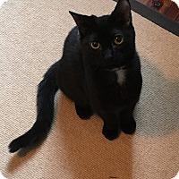 Adopt A Pet :: Smokey - Harrison, NY
