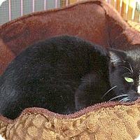 Adopt A Pet :: Kipper - Englewood, FL
