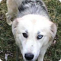 Adopt A Pet :: Meliah - Zanesville, OH