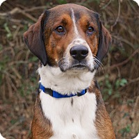 Adopt A Pet :: *Tucker - PENDING - Westport, CT