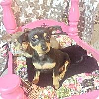Adopt A Pet :: Mary Lue - Brea, CA