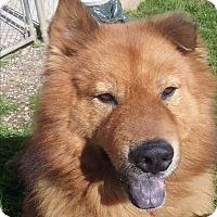 Adopt A Pet :: Brody - Sacramento, CA