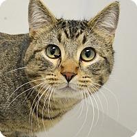 Adopt A Pet :: Lancelot - Springfield, IL