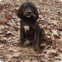 Adopt A Pet :: Dapper - Bedminster, NJ