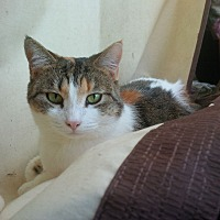 Adopt A Pet :: Meeko - Los Angeles, CA