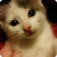 Adopt A Pet :: Vinnie - Toledo, OH