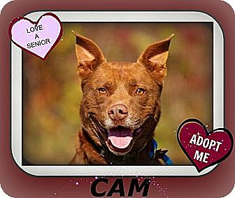 Shepherd (Unknown Type) Mix Dog for adoption in Middletown, New York - Cam