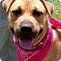 Adopt A Pet :: MANDY - Courtesy Post - Glastonbury, CT