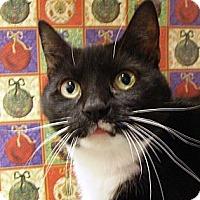 Adopt A Pet :: Marcella - Albany, NY