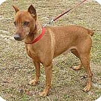 Adopt A Pet :: Rex - McDonough, GA