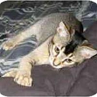 Adopt A Pet :: Chip - Davis, CA