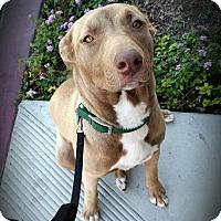 Adopt A Pet :: Jethro - Cypress, CA