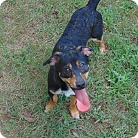 Adopt A Pet :: Ryder - Lufkin, TX
