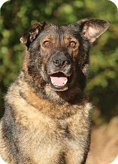German Shepherd Dog Dog for adoption in Nashville, Tennessee - Sofie