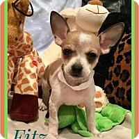 Adopt A Pet :: Fitz - Milton, GA