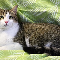 Adopt A Pet :: Winston - Greensboro, NC