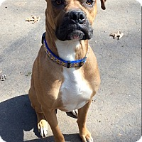 Adopt A Pet :: Zeke in CT - Manchester, CT