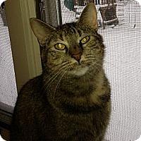 Adopt A Pet :: Scarlett - New York, NY