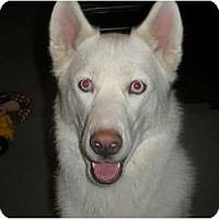 Adopt A Pet :: Ruger - Jacksonville, NC