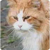 Adopt A Pet :: Julius - Crescent City, CA