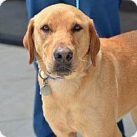 Adopt A Pet :: Mason - Cumming, GA
