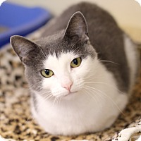 Adopt A Pet :: Princess Bubblegum - Chicago, IL