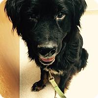 Adopt A Pet :: Jack - Ball Ground, GA
