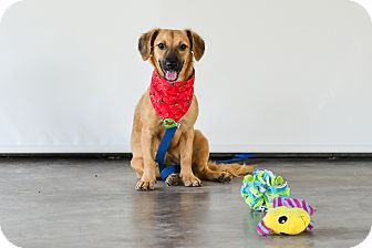 Labrador Retriever Mix Dog for adoption in Vancouver, British Columbia - Sandy
