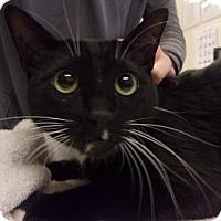 Adopt A Pet :: Cirrus - North Highlands, CA