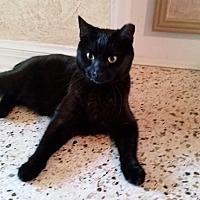 Adopt A Pet :: Pretty Boy  (Penny Lane) - Tampa, FL