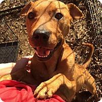 Adopt A Pet :: Sparkle - Jacksonville, NC
