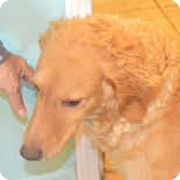 Adopt A Pet :: Selena - Prole, IA
