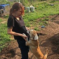 Adopt A Pet :: Pumpkin - Beeville, TX